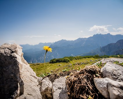 Flower, Mountains, Yellow, Nature, Flowers, Meadow