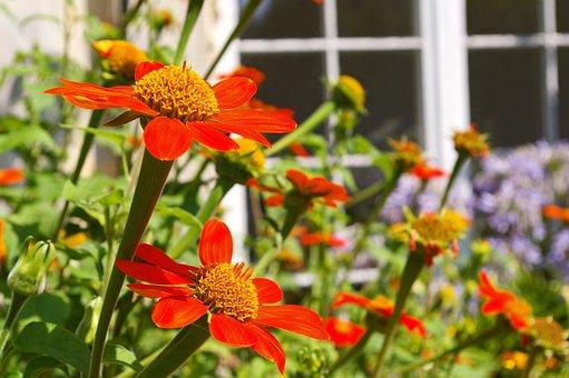 Summer Flower, Nature, Summer, Blossom, Bloom