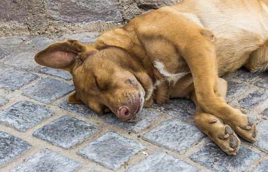 Dog, Sleep, Park, Pet, Animal, Head, Cute, Nose