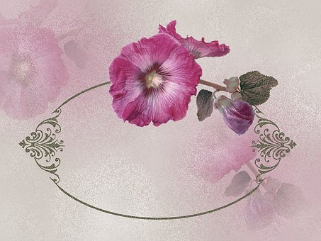 Flowers, Frame, Ornament, Mallow, Pink