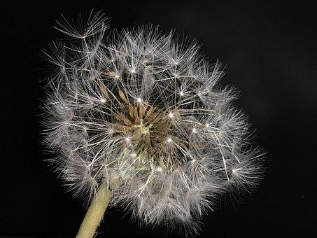 Seeds, Delicate, Flower, Nature, Plant, Botany, Floral