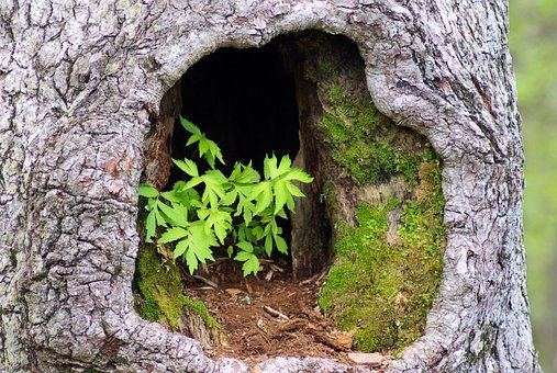 Plants In Hollow Tree, Tree, Trunk, Hole, Leaves, Plant