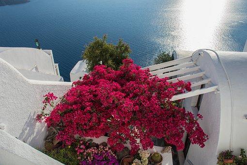 Flowers, Sea, White, Colorful, Summer, Landscape, Blue