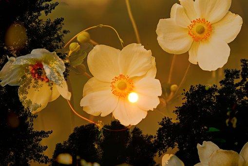 Anemone, Flower, Plant, Tree, Skies, Moon, Fantasy