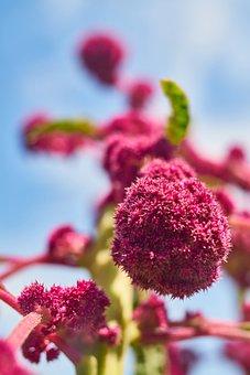 Flower, Plant, Nature, Spring, Garden, Blooming, Summer