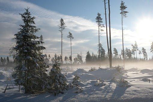 Winter, Landscape, Sun, Snowy, Tree, White, Snow