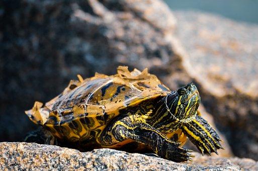 Turtle, Summer, Sun, Wild, Sky, Outdoor, Tortoise