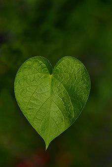 Leaf, Sweetheart, Heart, Nature, Love, Heart Shape
