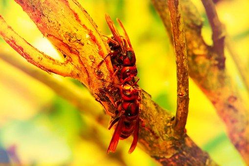 European Hornet, Insects, The Bark, Tree, Work, Socket