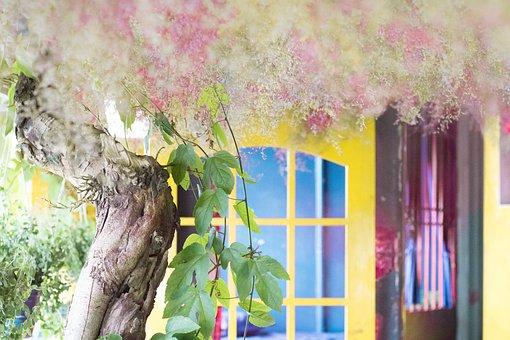 Tree, Gar, Romanticism, Nature, Spacer, Blue, Trees