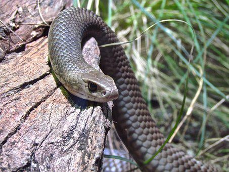 Snake, Shake, Curve, Reptile, Wild, Predator, Nature