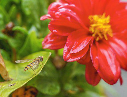 Insect, Flower, Nature, Animal, Bloom, Summer, Blossom