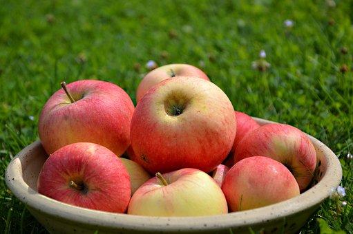 Apple, Fruit, Fruit Bowl, Fruits, Garden, Apfelernte