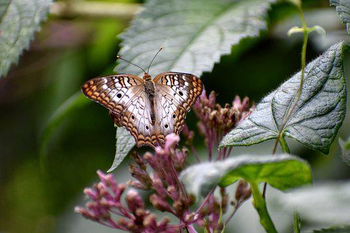 Butterfly, Plant, Leaves, Nature, Flower, Bloom