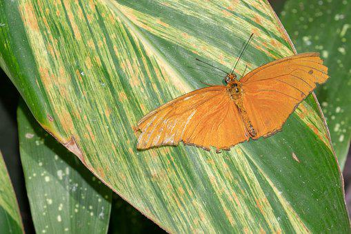 Butterfly, Fly, Conservatory, Wing, Tropical, Colorful