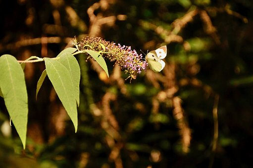 Butterfly, Nature, Flower, Animals, Wing, Colorful