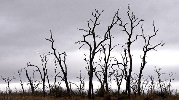 Trees, Dead, Dead Plant, Silhouette, Mystical