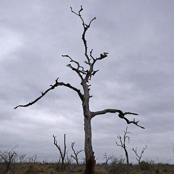 Tree, Dead, Dead Plant, Silhouette, Mystical, Landscape