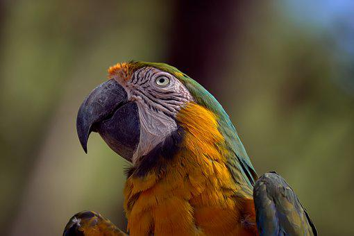 Bird, Parrot, Exotic, Colorful, Feather, Color, Head