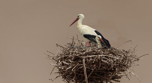 Bird, Two, Pair, Wildlife, Feather, Couple, Plumage