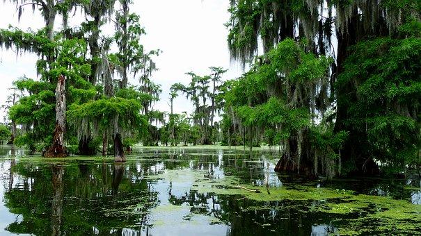Bayou, Louisiana, Marsh, Nature, Cypress, Water, Foam