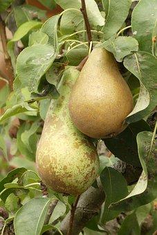 Pears, Fruit, Edible, Food, Healthy, Fruits, Vitamins