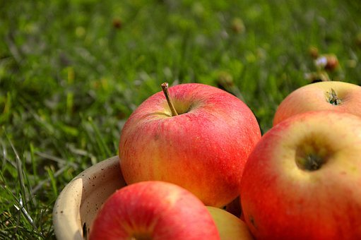 Apple, Fruit, Pome Fruit, Kernobstgewaechs, Garden