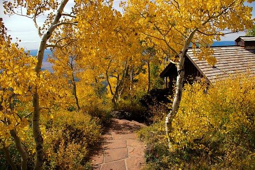 Autumn On Grand Mesa, Yellow, Golden, Aspen, Autumn