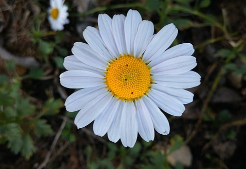 Gujeolcho, Fall Flowers, White Flowers, Wildflower