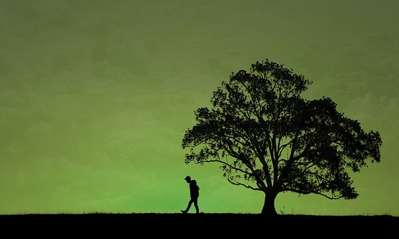 Guy, The Tree, Silhouette