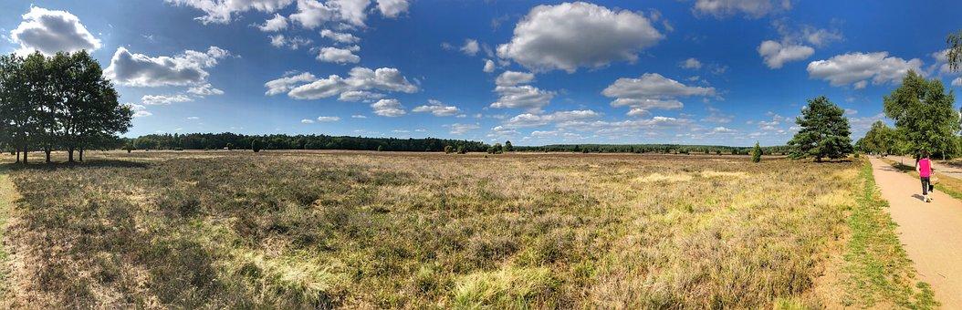 Lüneburg Heath, Nature, Heide, Heather, Heathland