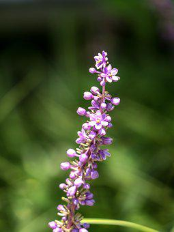 Flower, Natural, Green, Herbaceous, Plant, Purple