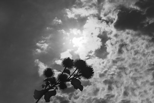 Heat, Clouds, Sky, Sun, Summer, Hot, Glistening