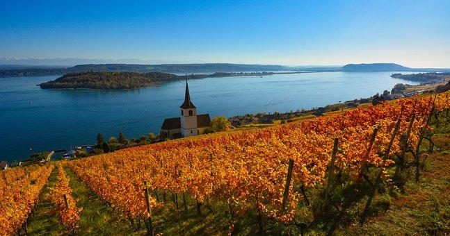 Vine, Lake, Vineyard, Panorama, Switzerland, Ligerz