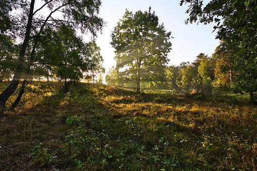 Golden Hour, Lüneburg Heath, Trees, Nature, Heide