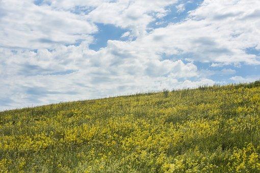 Sky, Field, Meadow, Flowers, Clouds, Slope, Hill