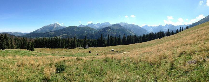 Tatry, Mountains, Rusinowa Logs, Landscape, Nature