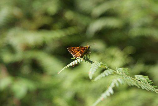 Butterfly, Nature, The Natura 2000 Network, Insect