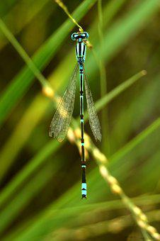 Nature, Dragonfly, Insect, Summer, Outdoors, Color