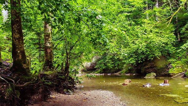 River, Eistobel, Isny, Nature, Reserve, Gem, Forest