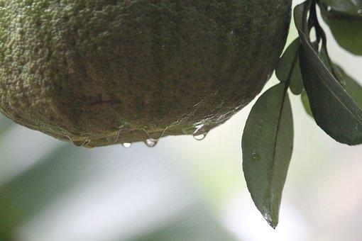 Nature, Leaf, Flora, Tree, Desktop, Food, Rain, Water