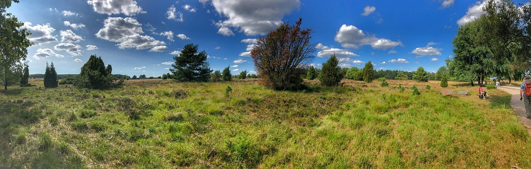 Heide, Lüneburg Heath, Nature, Heather, Pink, Heathland