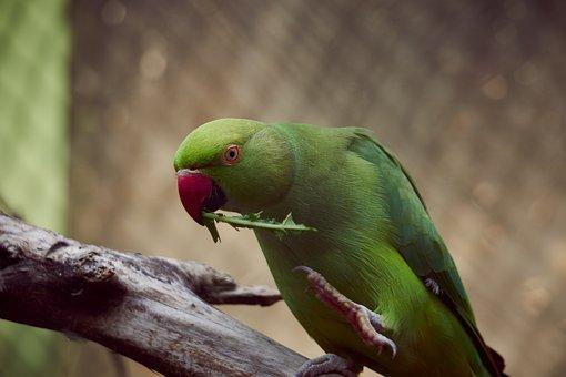 Parrot, Bird, Nature, Animal, Plumage, Animal World