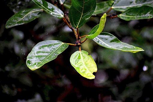 Rainy Day, Water Droplets, Wet, Rainy, Droplets, Rain