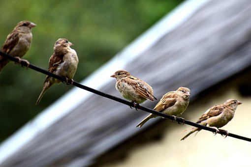 Bird, Sparrow, Nature, Sperling, Feather, Cheeky
