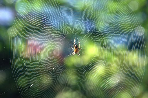 Cobweb, Spider, Insect, Summer, Indian Summer