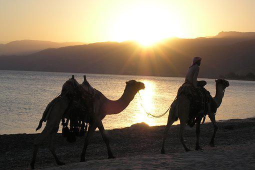 Egypt, Sunset, Desert, The Sun, Travel, Summer