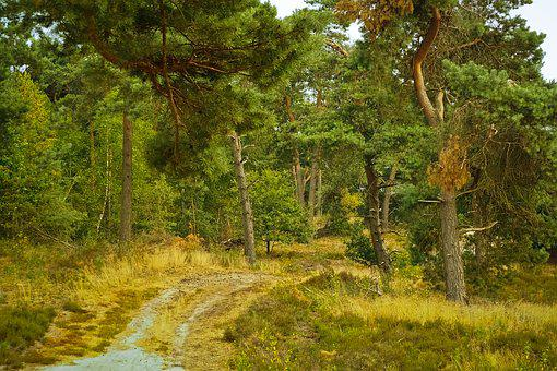 Forest, Trees, Nature, Landscape, Path, Away, Scenic
