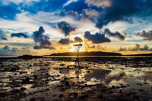 Mangrove, Sun, Water, Tropical, Wood, Travel, Blue