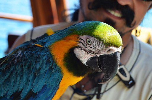 Parrot, Colors, Color, Bird, Nature, Blue, View, Gaga